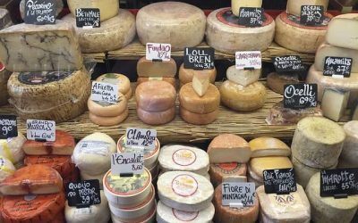 Reasons to Start Your Own Cheese Making Business