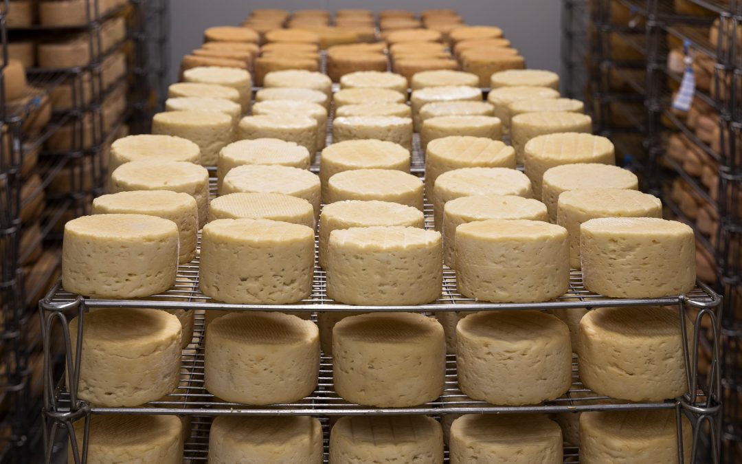 What are the Basic Steps in Cheesemaking?